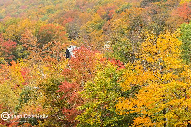 Fall foliage in Lincoln, New Hampshire, USA