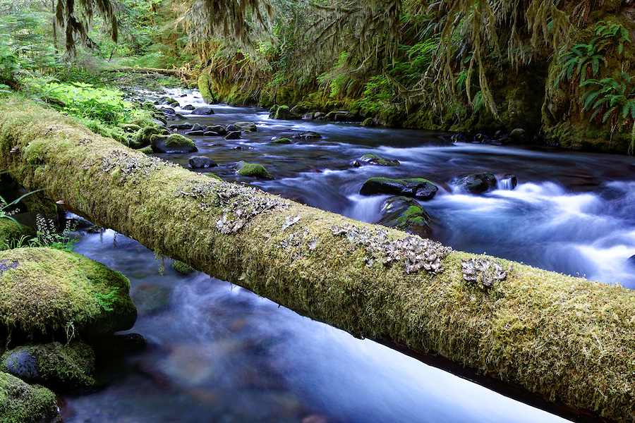 Mossy log over Lillian Creek, Olympic National Park, Washington