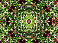Burgundy red and green flower mandala. Created by digitally enhancing one of my photographs from Granada gardens in Spain. It is full of vibrant colours and you can almost feel the sunshine of the place where I have photographed it. It could work well to enhance Feng Shui of your place, particularly for wood and fire related areas.