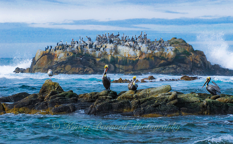 &quot;MONTEREY MARITIME MEETING&quot;<br /> <br /> Marine birds waiting out a storm near Monterey.