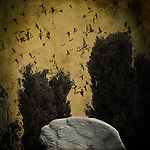 A flock of birds flying over a cemetery