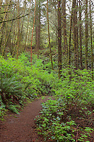 Thomas Creek Trail - Oregon Coast