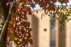 October 24, 2016; Falling leaf (Photo by Matt Cashore/University of Notre Dame)