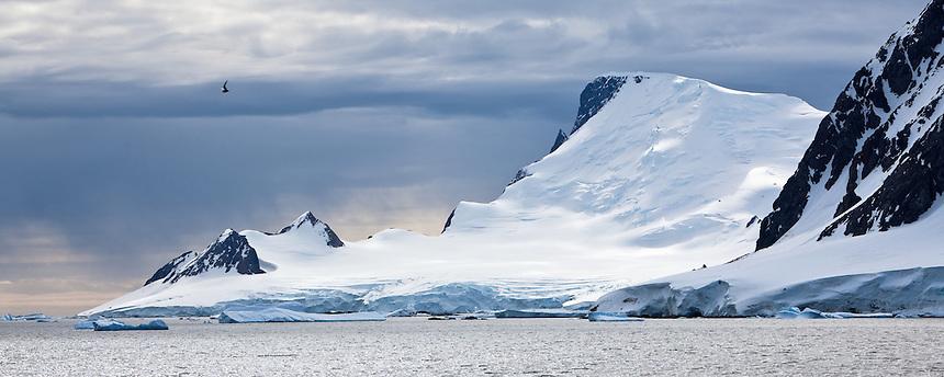 Mountains and bird in Antarctica