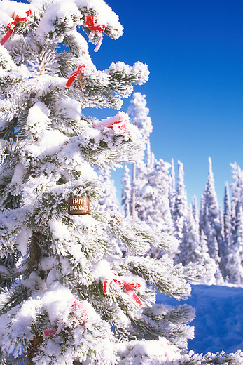 Snow and frost cover a tree in the mountains decorated for Christmas
