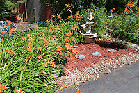 Hemerocallis fulva, orange daylilies daylily perennial blooming in summer