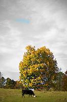 Fall foliage in Highland county virginia