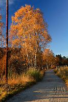 Autumn in Sirdalen, Norway.