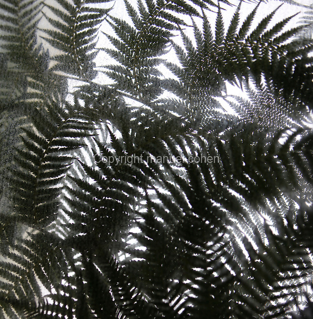 Tropical Rainforest Glasshouse (formerly Le Jardin d'Hiver or Winter Gardens), 1936, René Berger, Jardin des Plantes, Museum National d'Histoire Naturelle, Paris, France. Low angle view of outdoor tree ferns at the Art Deco style entrance, seen through the glass windows.