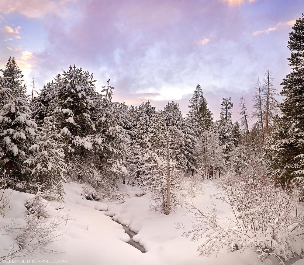 Winter at Alder Creek