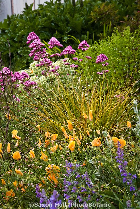 Amy Stewart's front yard cottage garden, no lawn flowering perennial garden with grass and poppies