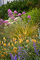 Amy Stewart's front yard cottage garden, no lawn flowering perennial garden with grass and poppies