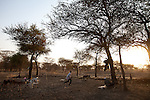 A boy chases down a calf at a cattle camp in Abyei.