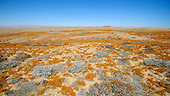 Lichen Hill, Richtersveld, South Africa