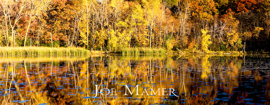 Autumn foliage along small pond in Minnesota. Panoramic