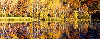 Autumn foliage along small pond in Minnesota. Panoramic