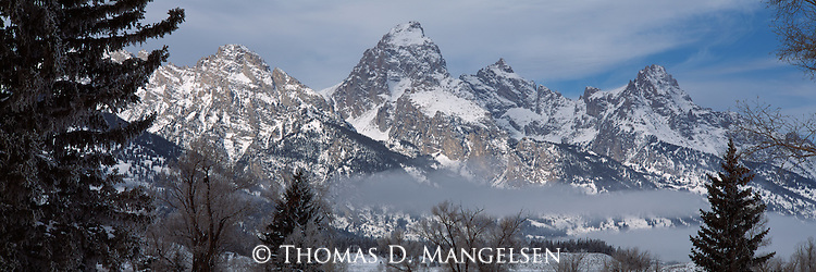 Through the trees a snow capped Grand Teton  rises above the mountain landscape in Grand Teton National Park.