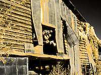 Old barn with wind-torn tin