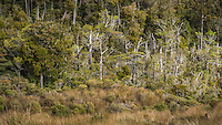 Native forest and alpine vegetation at Knuckle Hill, Nelson Region, West Coast, South Island, New Zealand