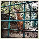 ** TO GO WITH AFGHANISTAN STORY FOR PETER MURTAGH - NO ARCHIVE, NO RESALE ** Kabul Zoo, 17 August 2012. (John D McHugh)