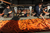 Farm hands with Vanderweele Farm in Palmer, Alaska, bag carrots for sale.