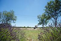 Sep Vanmarcke (BEL/LottoNL-Jumbo) in the lavender fields<br /> <br /> stage 13 (ITT): Bourg-Saint-Andeol - Le Caverne de Pont (37.5km)<br /> 103rd Tour de France 2016