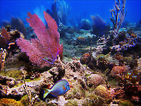 Scuba Diving - Puerto Plata, Dominican  - Day Five