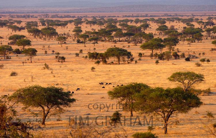 The Serengeti Plain in the Serengeti National Park, Tanzania.Grumeti,Tanzania, East Africa