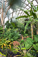 Tropical Conservatory greenhouse with palm trees and banana at Denver Botanic Garden
