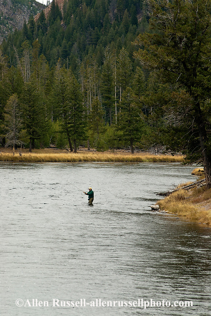 Fly fisherman on madison river in yellowstone national for Fly fishing yellowstone river