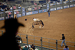 Houston Livestock and Rodeo Show 2011