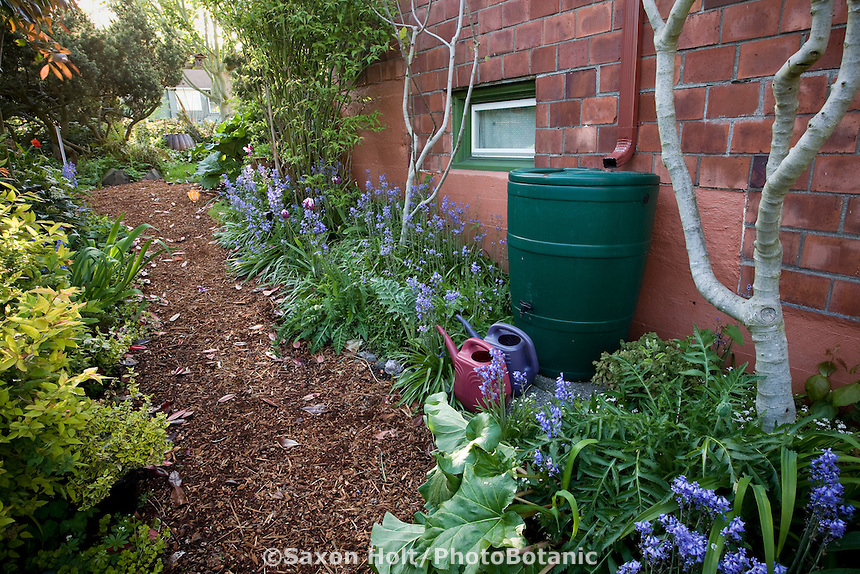Mulched path through side yard, small space sustainable garden with rain barrel to water plants