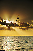 a bird flies over the sea and sail boat with heaven like clouds