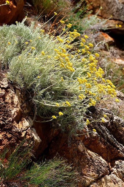 wild flowers at the Riserva Naturale dello Zingaro [ Zingaro nature reserve ] Scopello, Castellammare Del Golfo , Sicily.