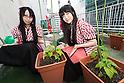 Akihabara maids plant vegetable garden