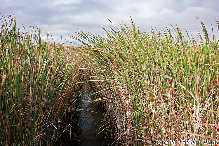 Tilting as if protecting the water below, grasses and cattails line a water channel along a path at the New Chicago Marsh at the southern tip of San Francisco Bay near San Jose, California.