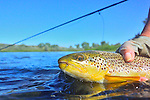 Fly Fishing on the Bighorn, Montana