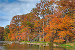Autumn in the Texas Hill Country can be colorful if you know where to look. Here at Pedernales Falls State Park, the cypress trees come ablaze in orange, red, and gold in mid-November...<br />