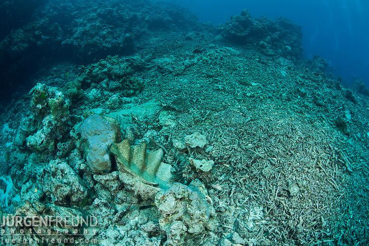 Destroyed coral reef after tropical cyclone. Ribbon Reefs, GBR, Australia