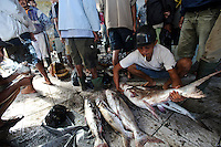 Fish for sale at the Paotere fish market, Makassar, Sulawesi, Indonesia.