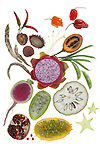 Food as Art - Fruits and Vegetables photographed on a light table.