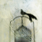 Bird out of cage. Photo based illustration with textures and patterns.