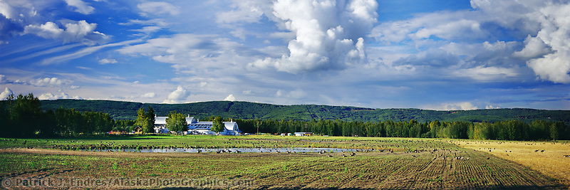 Panorama of Creamer's Field migratory waterfowl refuge, Fairbanks, Alaska