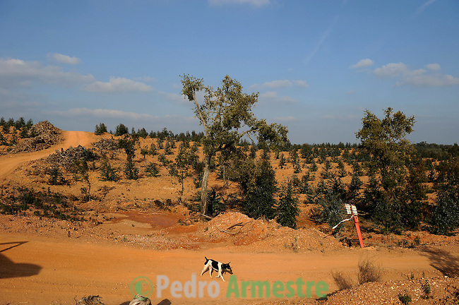 Spain. Huelva. The company Silvasur Agroforestry SA, ENCE Group, is engaged in intensive plantation of eucalyptus in the protected landscape of Rio Tinto. A controversial activity and not very well regarded by the environmental groups who accuse Ence of habitat destruction and elimination of native species. on february 2011 (c) Pedro ARMESTRE<br />