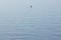 SEA_LOCATION_80245