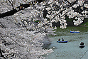 April 7, 2012, Tokyo, Japan - Rowing boats leisurely floats in the Imperial moat under fully-bloomed cherry blossoms at Chidorigafuchi park in the heart of Tokyo on Saturday, April 7, 2012...Its Easter weekend for Christians but its a cherry blossoms viewing time for Japanese. The annual cherry blossoms blooms is a national obsession in the country and specially this years Hanami was keenly awaited because of the harsh winter and after a disastrous year of March 11 earthquake and tsunami in the nations northeastern region. (Photo by Natsuki Sakai/AFLO) AYF -mis-.