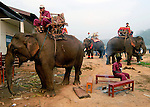 Asian elephants (elephas maximus)at the Elephant Asia festival held in Pak Lai, Laos.