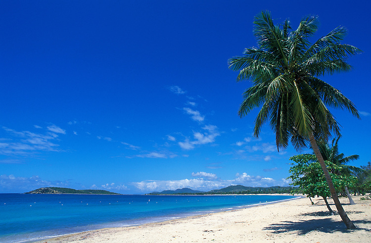 Beach and cocopalm tree at Sun Bay, Vieques Island, Puerto Rico.