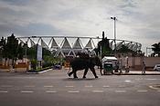 An elephant walks past the main entrance of the Jawaharlal Nehru Stadium in New Delhi, India.