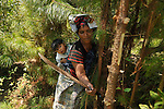 Women from San Mateo, Ixtatan cleaning debris in the forest, to give new trees better conditions - space, light, and nutrients - to grow.
